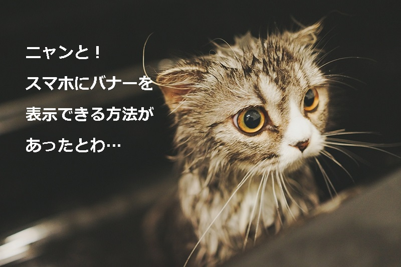Hir86_syawakaradetakaruosuneo201308