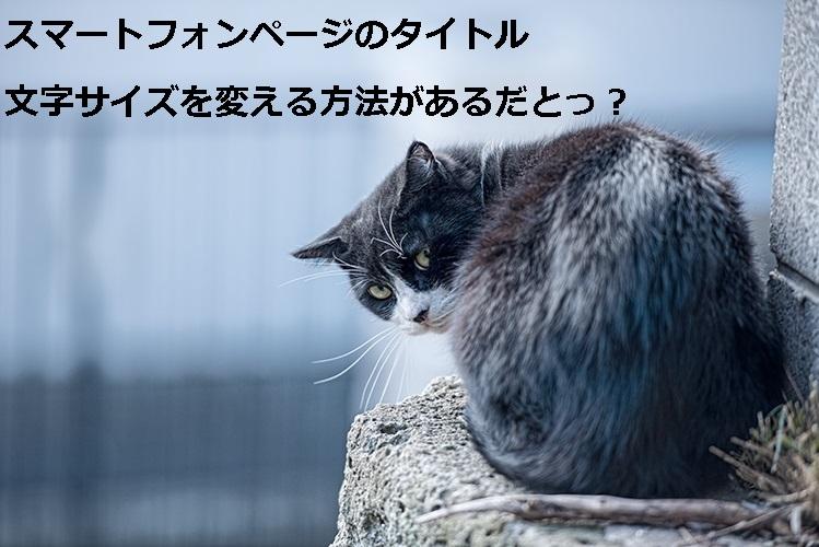 Mar93_ushirowokeikaineko20140113500