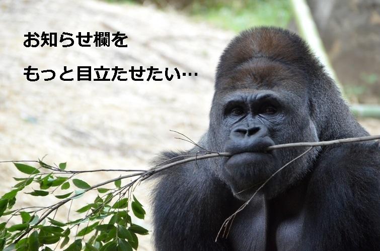 C784_edawokuwaerugorira500