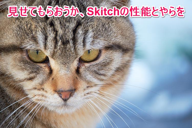 Skitchcat