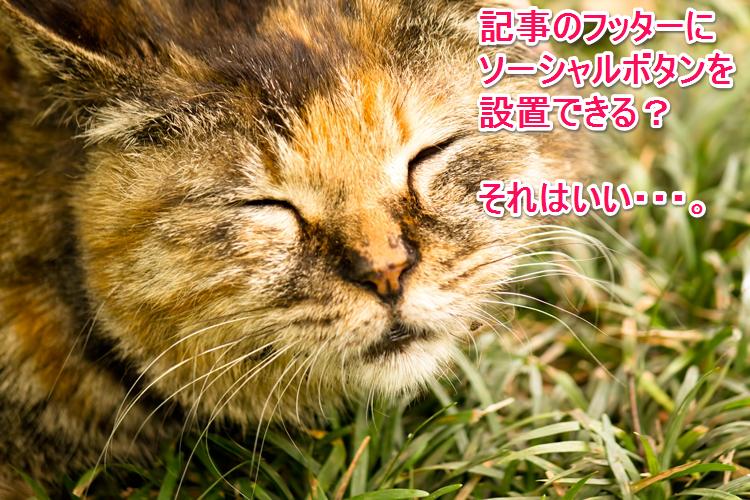 Socialcat