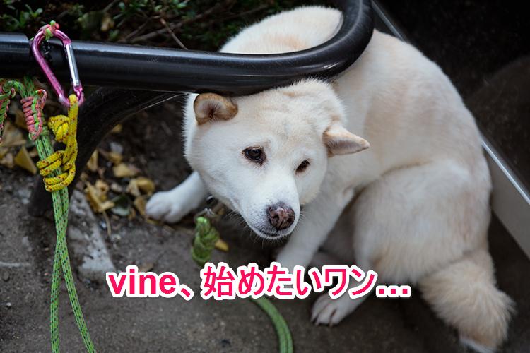 Vinedog